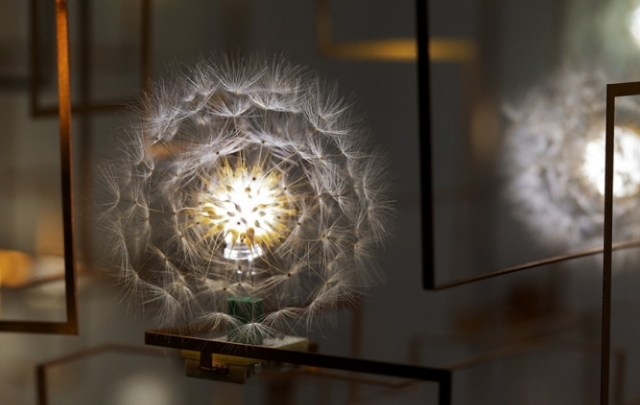 LED Dandelion Lights