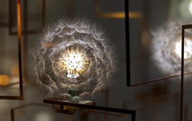 LED Dandelion Lights