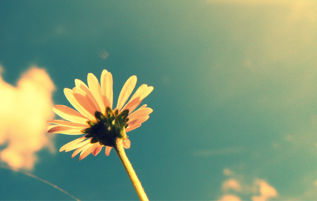 Summer, Sky And A Flower